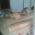 Local cats