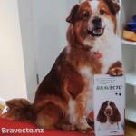 Jack the Bravecto dog